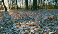 Погода в Свердловской области: резкое понижение температуры и заморозки